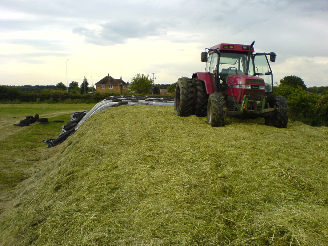 silage making 1 gary bates, associate professor, plant and soil science corn silage c foraging ahead for a greener tomorrow sp434-d agricultural extension service.
